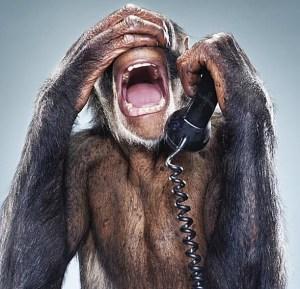 allo-animaux-singe-bananne-telephone