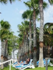 Plage de Limassol
