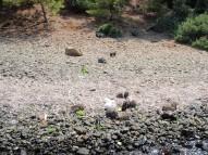 Hisaronu-Rabbit island